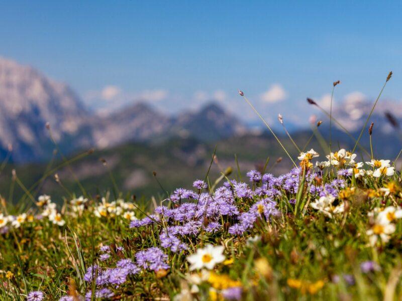 Chiemgauer Alp